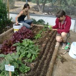 Gardeners planting at the Via Organica Ranch