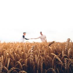 two people in a wheat field on a farm shaking hands