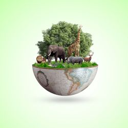 wildlife and animals on a globe