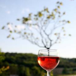 wine glass and tree