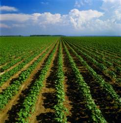 Organic Farming Conference To Help Farmers Get Certified