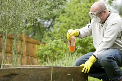 Man using pesticides on his garden