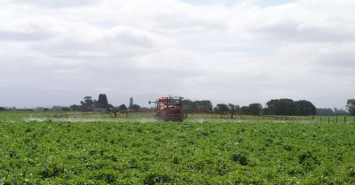farm crop field being sprayed with an herbicide by a red tractor