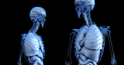 interior view of two human bodies complete with skeleton and organs