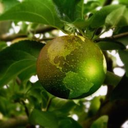 green apple on a tree with the earth imprint on it and water droplets