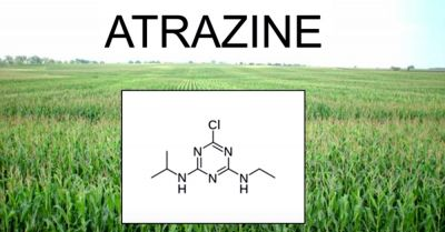 model of chemical pesticide atrazine