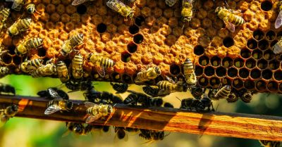 bees congregating around a honey comb hive