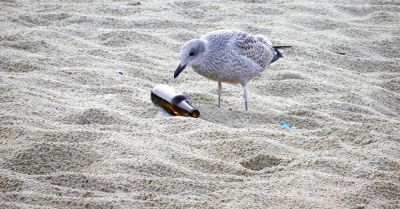 bird inspecting a discarded glass bottle on the beach