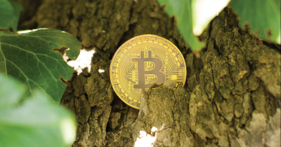 Bitcoin in a tree.