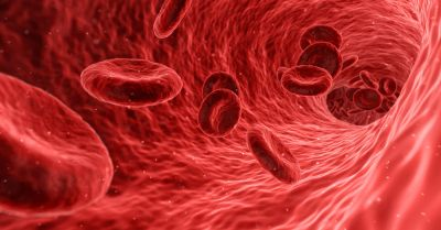 Red blood cells floating through a stream of blood