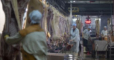 blurred image of the inside of a slaughterhouse