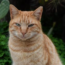 Orange and tan cat with a very skeptical look on its face