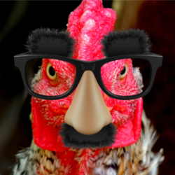 A chicken wearing glasses in disguise