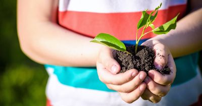 young child holding a small green seedling plant in a clump of soil
