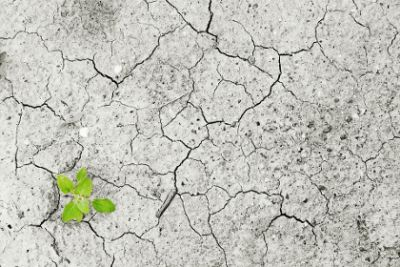 Climate change leaves once fertile ground struggling to give life during uncommon droughts