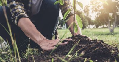 Person planting a tree.