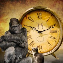 gorilla and kitten in front of a large clock