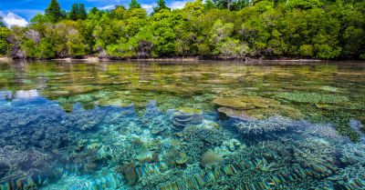 coral reef beneath the ocean beside the coast