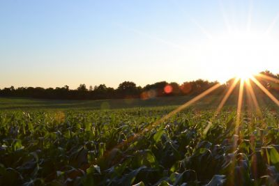 USDA certified organic farmers in Tennessee can now seek reimbursement from state