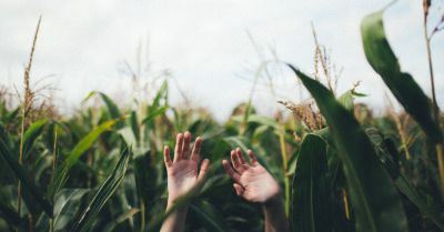 person with their hands up toward the sky in a corn crop field