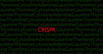 CRISPR genetic modifications