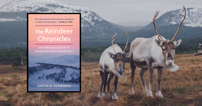 The Reindeer Chronicles by Judith D. Schwartz