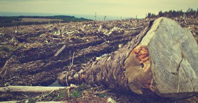 trees and logs cut down from a forest