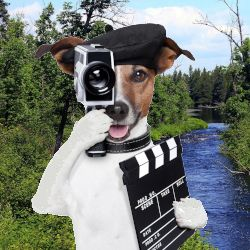 small dog in a director beret with a camera and clap board in front of a wooded river