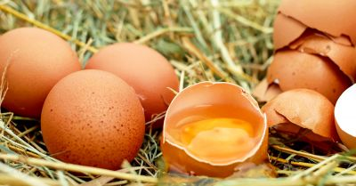 cracked brown eggs sitting on grass
