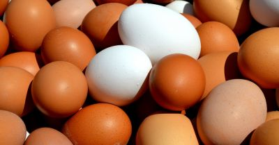 brown and white chicken eggs