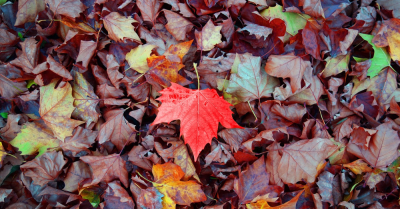 A pile of leaves with a red one in the middle