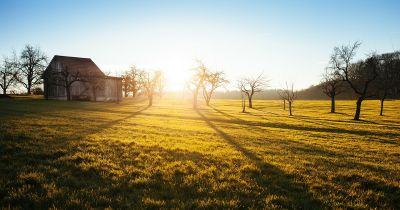 barn and trees in a farm field at sunrise
