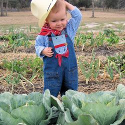 young child in a cabbage field wearing a cowboy hat