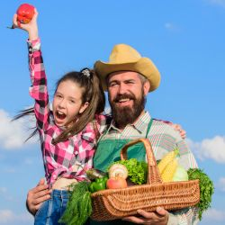 farmer and child with a basket of harvested vegetables on a farm field on a sunny day