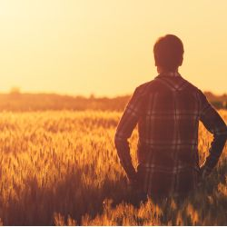 farmer standing in a wheat field at sunset