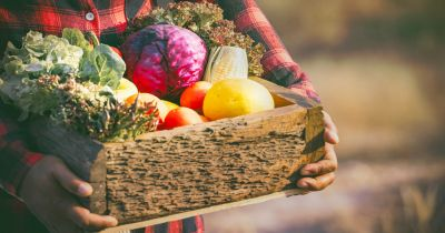 farmer in a flannel shirt holding a wooden box of freshly harvested vegetables and produce