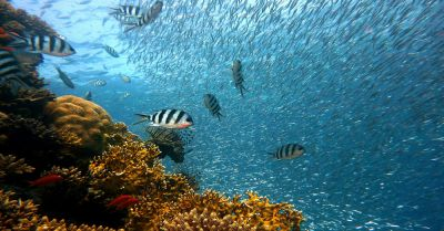 colorful tropical fish swimming in the ocean near a coral reef