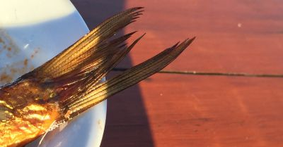 tail of a fish on the edge of a plate glinting in sunlight
