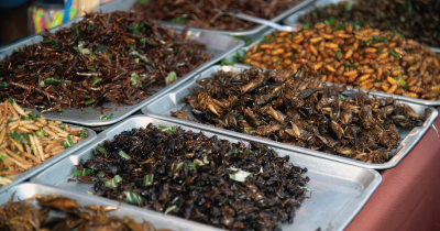 Insects being served for food.