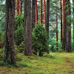 trees in a forested area of a park