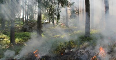 smoke and haze flowing through trees of a forest fire