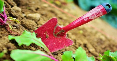 red gardening shovel in a bed of soil near some green plants