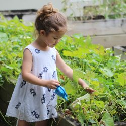 young child using a small blue watering can to water plants in a garden