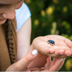girl holding a beetle in her hand