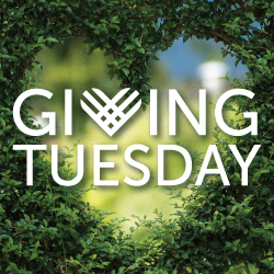 Giving Tuesday logo over green bush with heart shape trimmed out