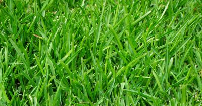Green lawn of grass