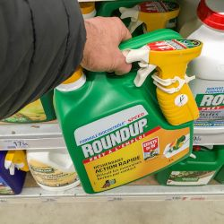 green bottle of Monsantos Roundup glyphosate herbicide being picked up off a store shelf