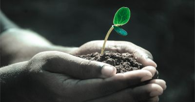 pair of hands holding a small green seedling in soil