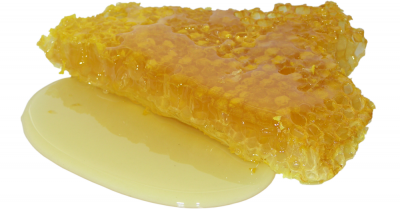 section of honeycomb