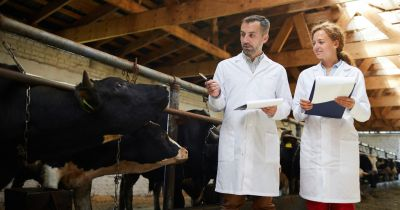 veterinarian inspectors at a dairy